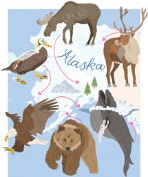 DawnC_BBCWildlife_Alaska