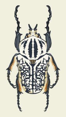 DawnC_InsectEmporium_GoliathBeetle