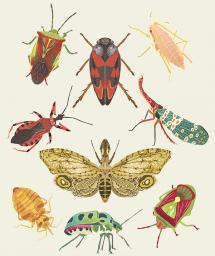 DawnC_InsectEmporium_TrueBugs