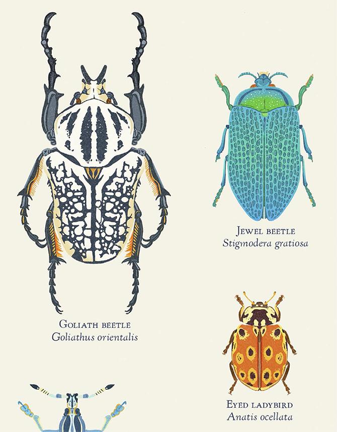 DawnC_InsectEmporium_Print_Crop